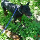 moj Max in gozdna soseda