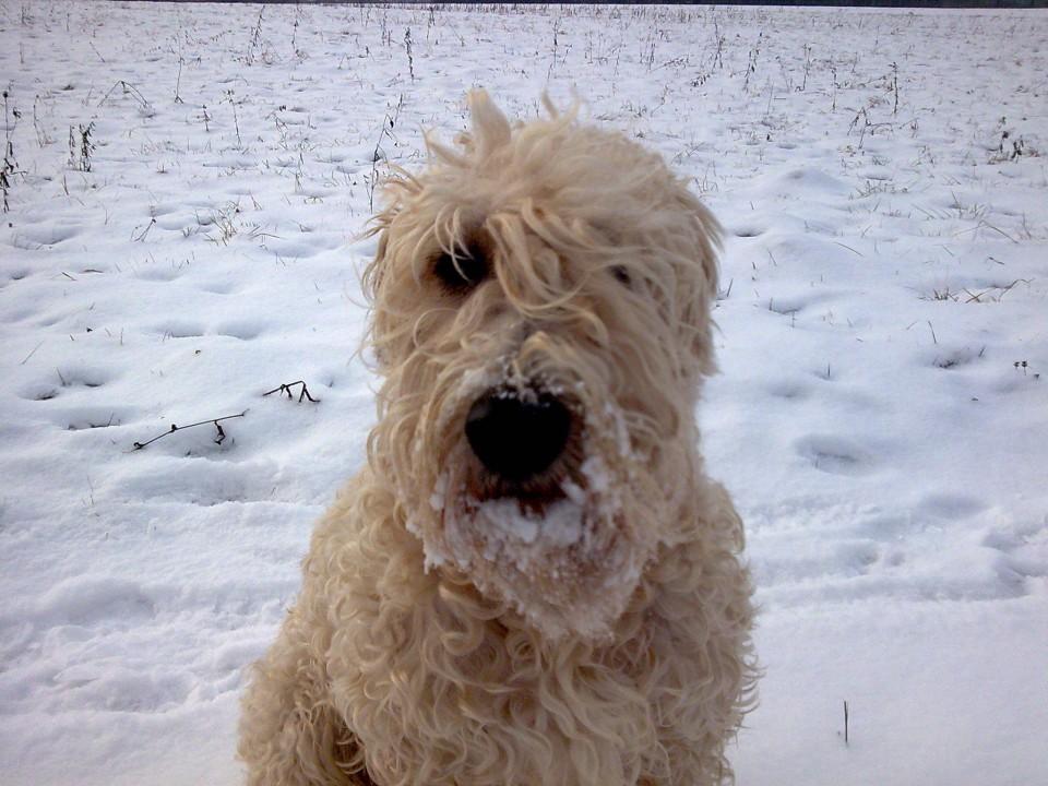 2009.01.18. - Par frišnih pred snegom - foto povečava