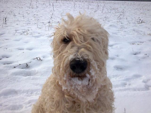 2009.01.18. - Par frišnih pred snegom - foto