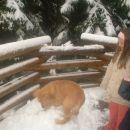 Oli prvi sneg