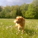 Na travniku (slaba grafika - slikano s telefonom)