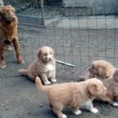 Feli puppies 2007.