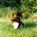 Ni samo lep, tudi lov mu gre dobro od rok. Bravo, oče!