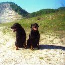 Demsi in peri leta 2002