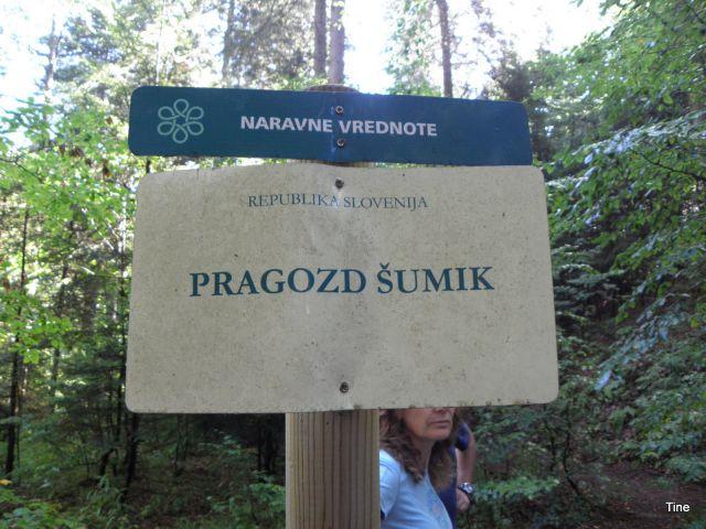 Obiskali smo enega od pragozdov v Sloveniji
