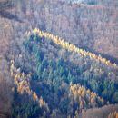 Smreke in macesni v objemu bukovega gozda