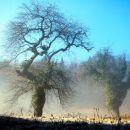 Meglice, modrina, snežni poprh, stari drevesi z gostiteljem