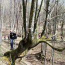 Vili počiva ob drevesnem orjaku z mladimi poganjki