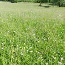 Do Podsmreke so nas spremljali cvetoči travniki