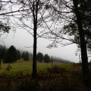 Meglice so pokrivale gorske pašnike
