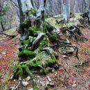 Tudi Andrej je opazil to čudovito delo narave