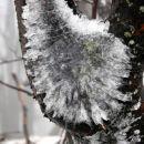 Na drevju so nastajale čudovite poledenele skulpture
