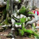Še zadnji pozdrav igrivega gozda