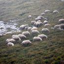 Danes je bilo vse belo okoli nas, megle, oblaki, ovčke, le sneg je manjkal