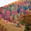 Že sam pogled na gozdove nad nami nam je vlival dobro voljo