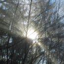 Iz temnega gozda proti soncu, kot simbolika za odhod v svetlo večnost