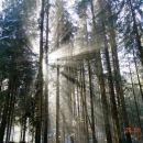 Vijuganje po čarobnem gozdu
