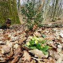 ... in trobentice, ...., pomlad je tu