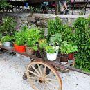 Zelenjavni vrt dišavnic