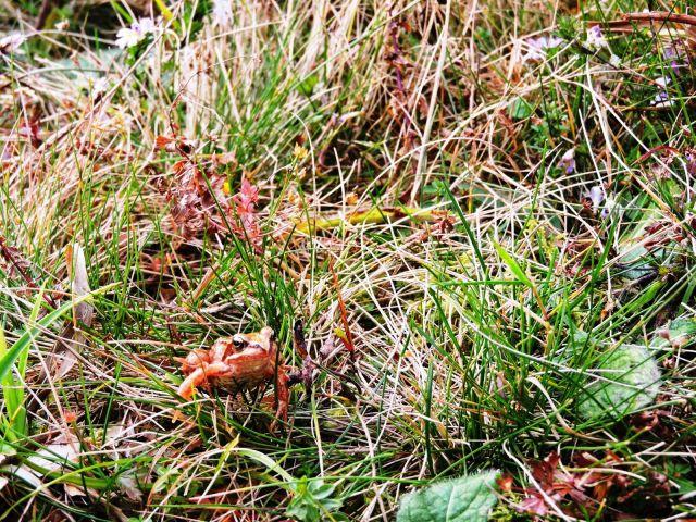Mala žabica - sekulja - nas je opazovala, kako drugače kot iz žabje perspektive