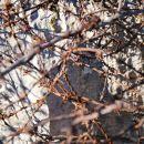 Žalostni ostanki ograjenega področja smodnišnice