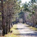 Proti iIpici smo se podali po Resslovi gozdni učni poti