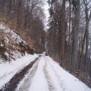 ...gaženje je za mano in že na gozdni cesti pod Plešivcem...