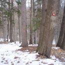 ...prijetno je bilo v gozdu in nekaj še snega...