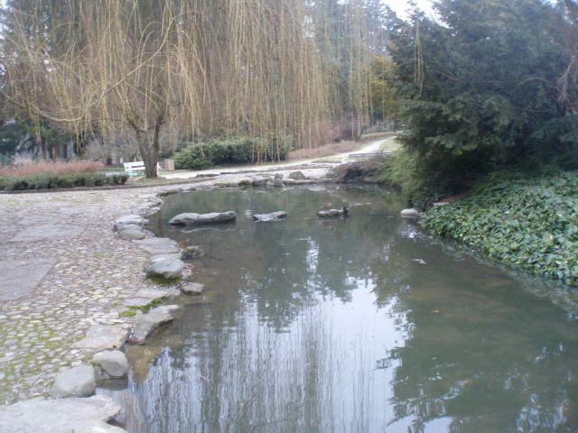 ...ob ribniku v mestnem parku in račji par...