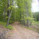 ...in že na poti za Svetino po gozdu...