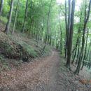 ...v gozdu...