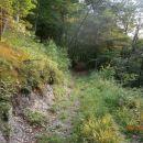 ...gozd popušča...