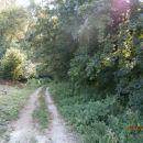 ...po gozdni cesti še nekoliko proti Ločam