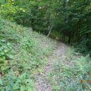 ...prijetna gozdna pot...