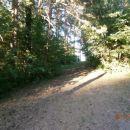 ...v gozd in na pašnike...