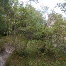 ...večja skala ob poti-razglednik...
