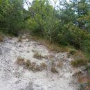 ...počasi prehod v gozd...