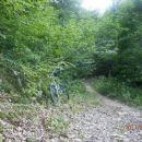 ...gozd zaznamuje ta vzpon...