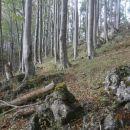 ...med koreninami in skalami...