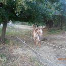 ...konji na prostem...
