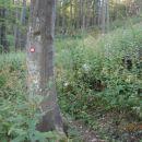 ...v gozdu ponovno...