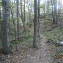 ...v objemu gozda...