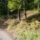 ...iz gozdne ceste na gozdno pot...