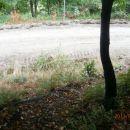 ...neposredno pred izhodom ponovno na gozdno cesto...