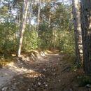 ...lep, še sončen gozd...
