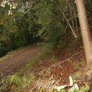 ...in povratek na gozdno cesto za kratek vseeno krog...