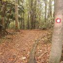 ...lepa gozdna pot...