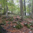 ...delno blatna in razmočena gozdna pot...