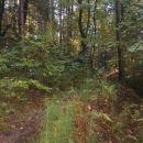 ...nekoliko orientacijsko zahtevno v bolj vlažnem gozdu...