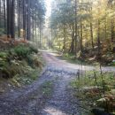 ...in na gozdno cesto za kratek čas...